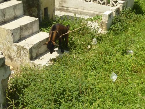 Haïti- sept 2012 183.jpg